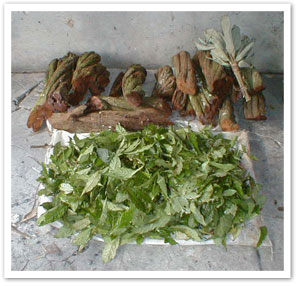 The ingredients for the ayahuasca drink